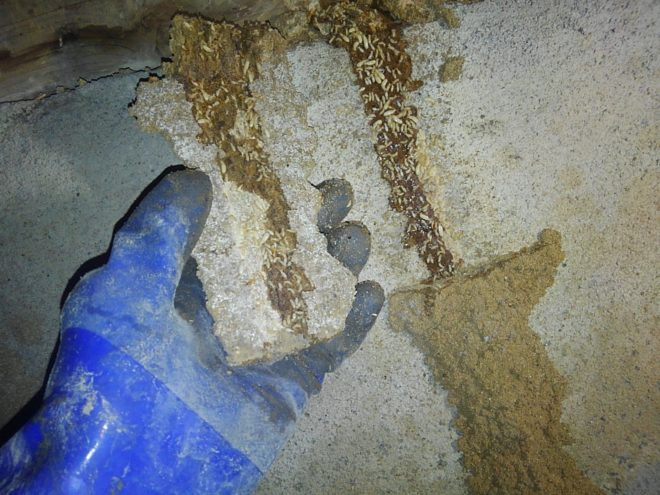 熊本県荒尾市シロアリ蟻道
